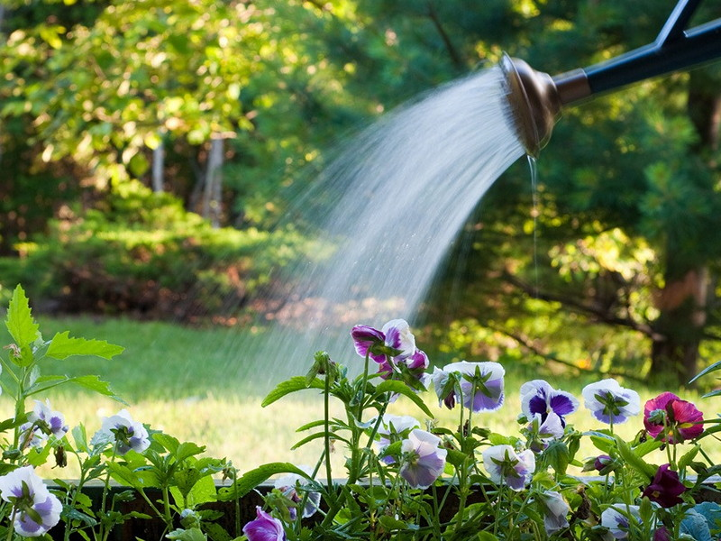 растениям нужна вода в картинках наполнены водой слоем